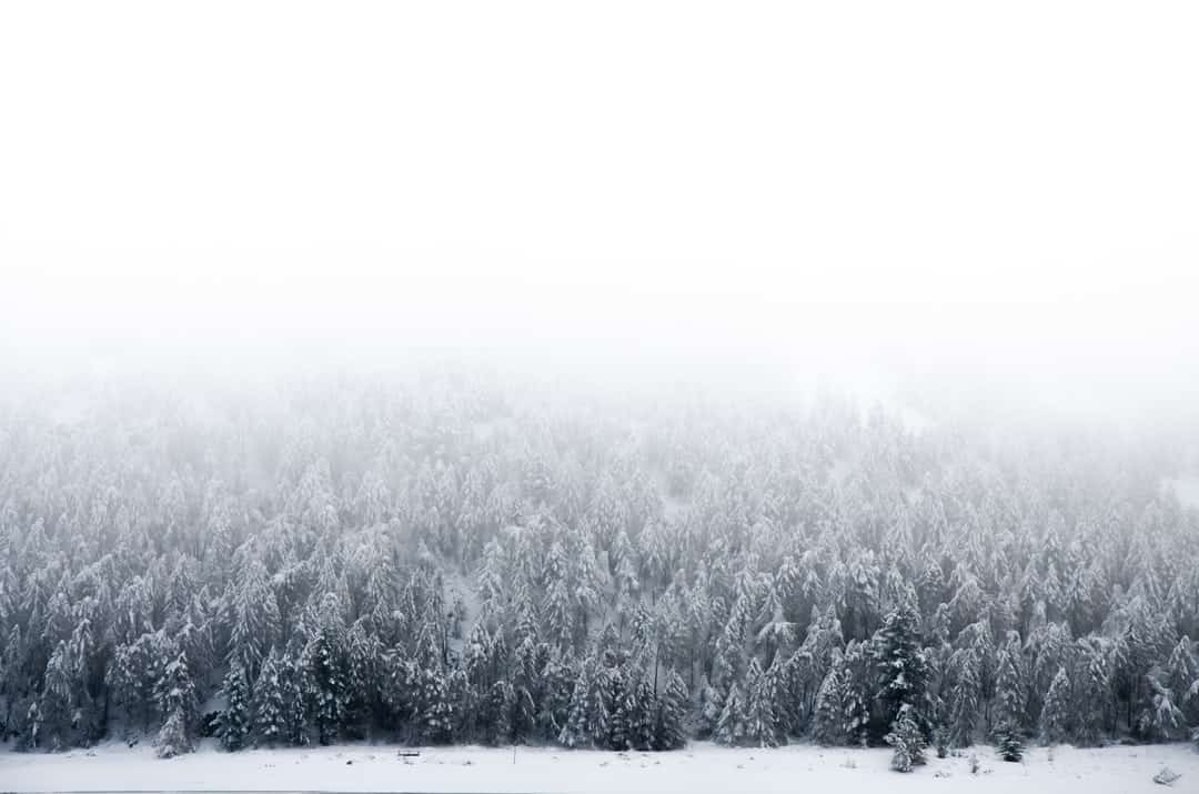 A snow covered field